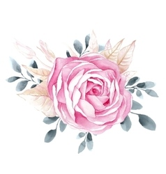 Watercolor rose flower isolated vector