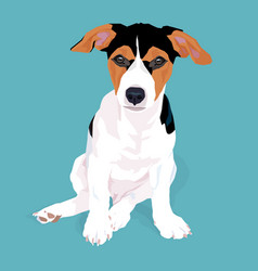 Adorable cute jack russell terrier dog sitting on vector