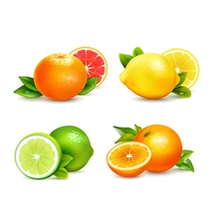 Citrus Fruits 4 Realistic Icons Set vector