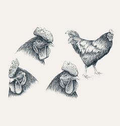 collection rooster heads vector image