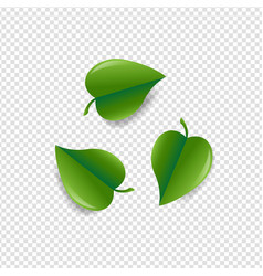 green leaves symbol isolated white background vector image