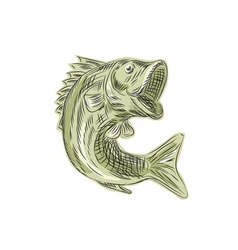 Largemouth Bass Fish Etching vector image