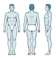 Man body model Front back and side human poses vector