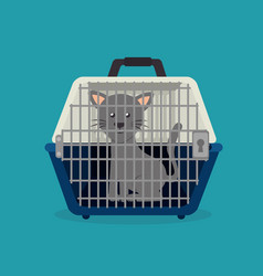pet animal design vector image
