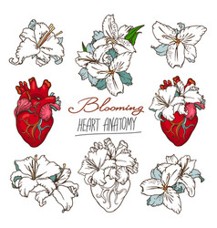 Set stylized anatomical human heart and white vector