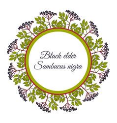 Wreath european black elderberry vector