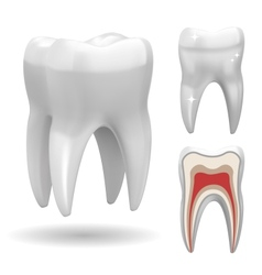 excellent tooth vector image vector image