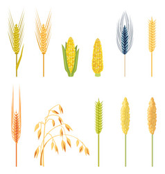 field plants in a flat style vector image vector image