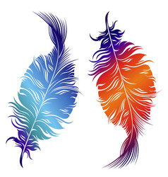 design of decorative feathers vector image vector image