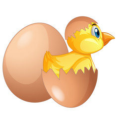 Chick comes out egg vector