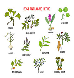 Collection anti aging herbs vector
