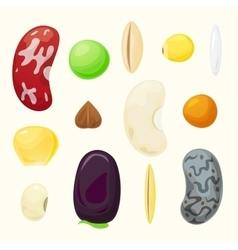 Set grains of different plants set vector image