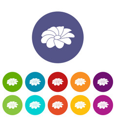bright flower icons set color vector image