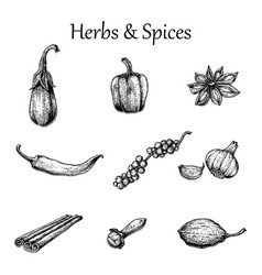 Herbs and spices hand drawing vintage style vector