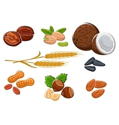 Nuts sunflower seeds and wheat ears vector image