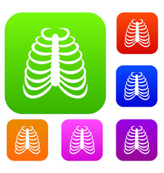 Rib cage set collection vector
