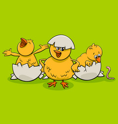 cartoon little chicks hatching from eggs vector image