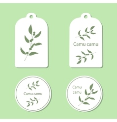 Camu camu leaves and berries vector