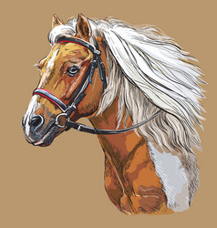 Hand drawing horse portrait 21 vector
