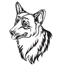 image corgi dog on white background vector image