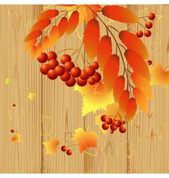 leaves and berries vector image