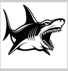 shark logo for a sport team on white vector image