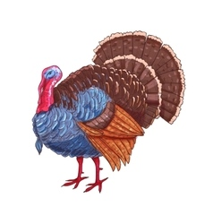 Thanksgiving isolated turkey color sketch vector