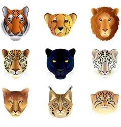 big cats heads set vector image