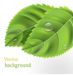 Bio green leaves vector