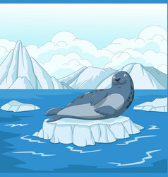 Cartoon seal on ice floe vector