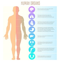 People and human organs brain lungs heart stomach vector