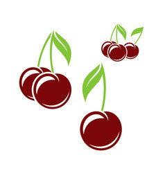 cherry isolated berries on white background vector image vector image