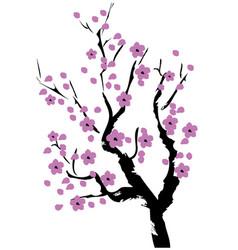 Cherry blossom lavender vector