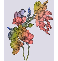 Colorful Sketch of a Bouquet of Spring Freesias vector image