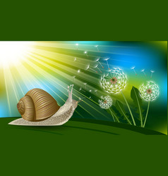 Snail and dandelion boke vector