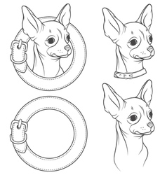 A set of drawing of the chihuahua in the collar vector