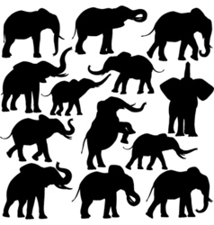 African elephants vector