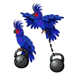Blue parrot is tied to the weight isolated vector