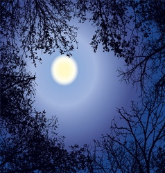 Night forest gainst the night sky in a full moon vector
