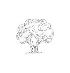 Olive Tree Hand Drawn Realistic Sketch vector