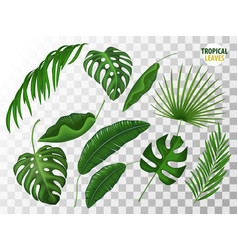 Tropical leaves realistic set vector