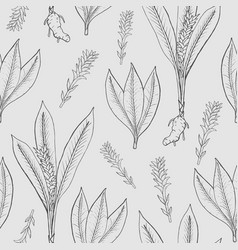 Seamless pattern with turmeric medical botanical vector