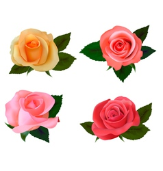 group of a beauty roses vector image vector image