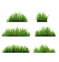 Green grass border big set white background vector