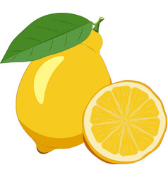 lemon isolated on white background vector image