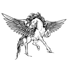 White pegasus mythological winged horse vector