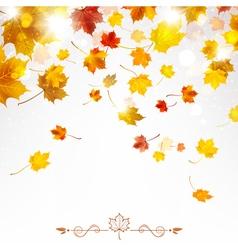 Autumn falling maple leaves vector