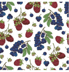 berries collection-06 vector image vector image