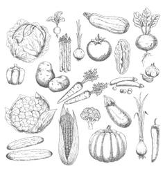 Autumn harvest sketch symbol with fresh vegetables vector