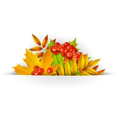 Banner Autumn background or template card vector